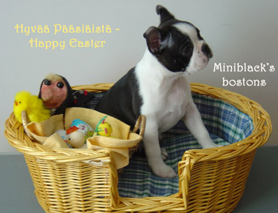 Miniblack's Hot Stuff as a Easter bunny